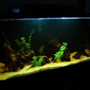 Driftwood in aquariums: a fish guide